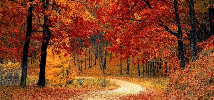 E in autunno…